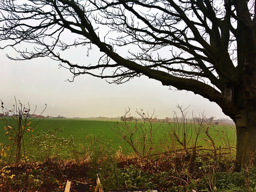 Under the old chestnut-tree, over the fields