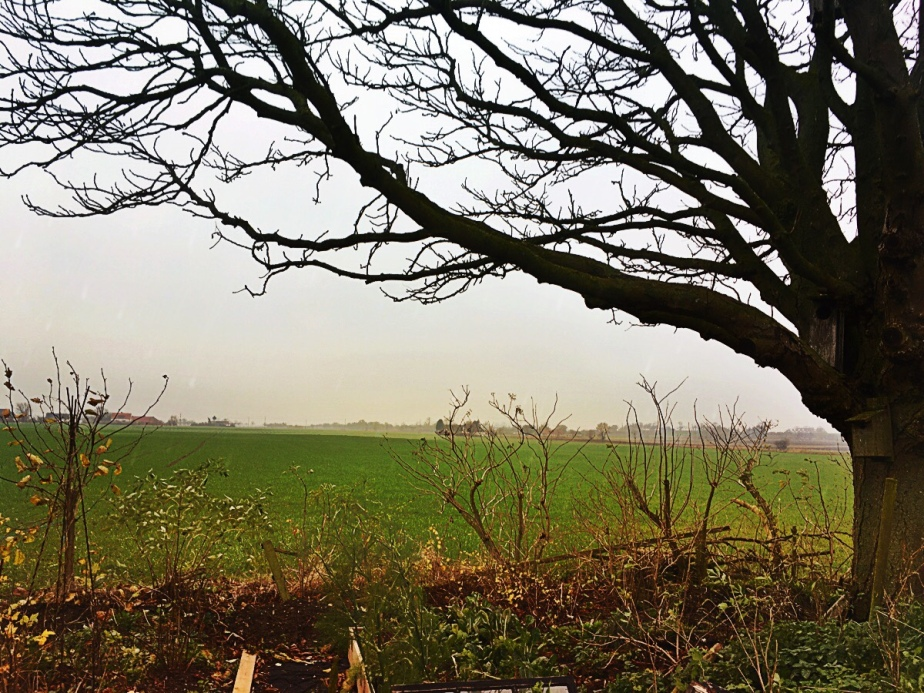 Under the old chestnut-tree, over thefields